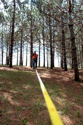 looking-up-a-tap-measure-line-in-pine-trees