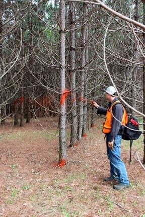 pete-spraying-paint-gun-on-pine-trees