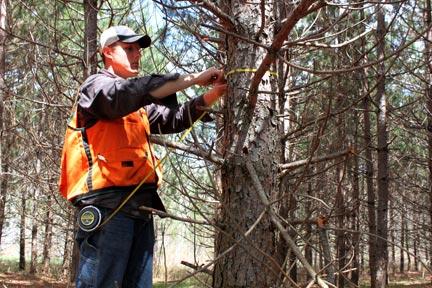 pete-measuring-tree-diameter
